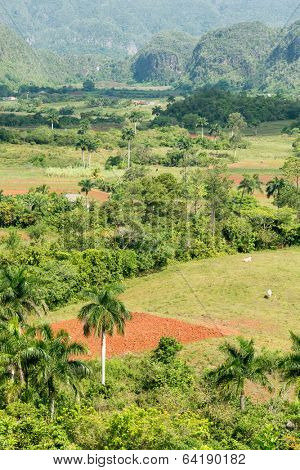 The Vinales Valley in Cuba, a natural landmark famous for its tobacco plantations