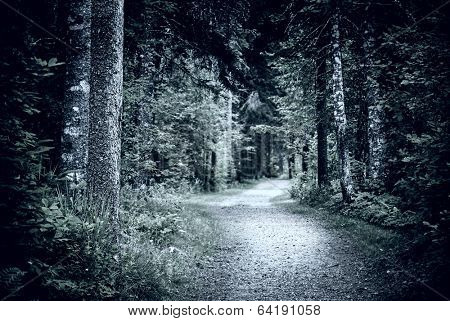 Path winding through dark moody forest with old trees at night