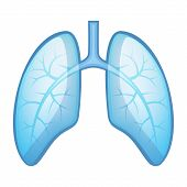 stock photo of bronchus  - Human Health Lungs and Bronchi - JPG