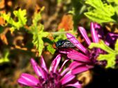 stock photo of blowfly  - A close - JPG