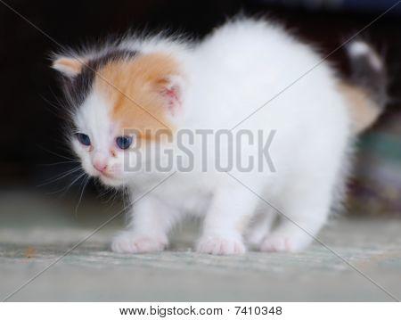white kitty on dark background
