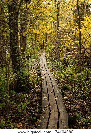 Duckboards in autumn forest