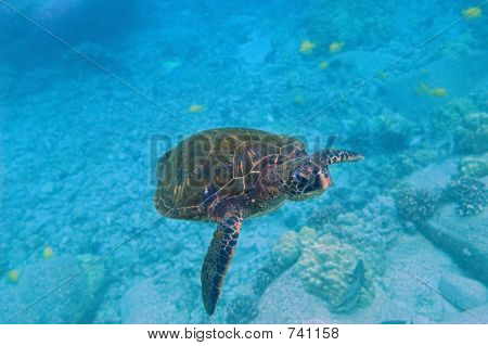 Tropical Underwater Scene - Sea Turtle