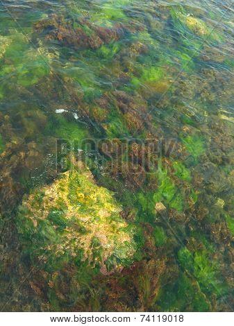 multicolored algae and stone in sea