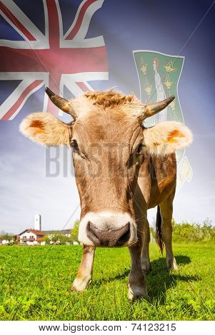 Cow With Flag On Background Series - British Virgin Islands