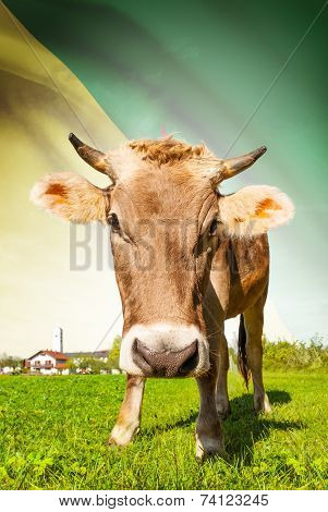 Cow With Flag On Background Series - French Guiana