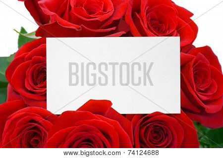 Card and roses, isolated on white background