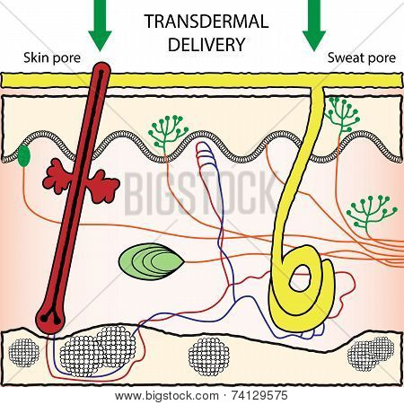 Transdermal Drugs Delivery System