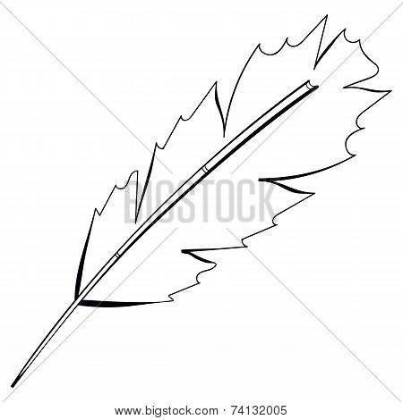 Vector freehand drawing black bird feather isolated on white background.
