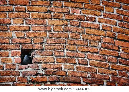 Brick Wall And Jackdaw Sitting