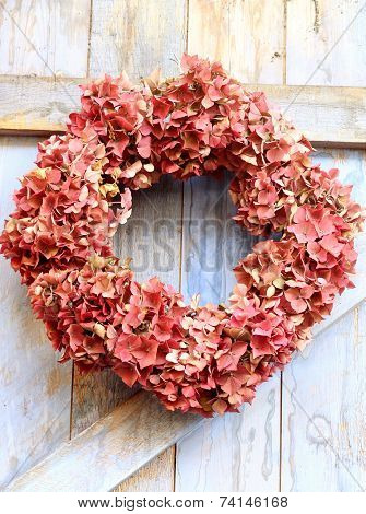 An autumn wreath of faded hydrangea flowers