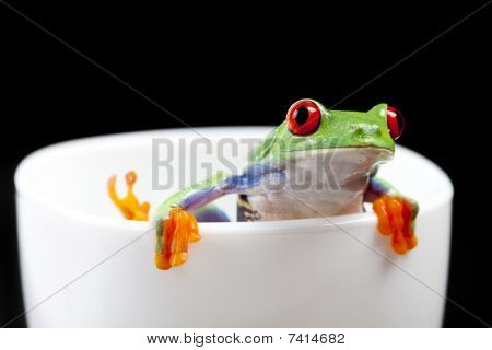 Red eyed tree frog on cup