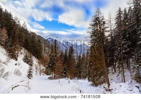 Forest near Village Umhausen and waterfall - Tirol Austria - travel background