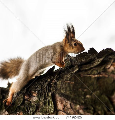 Funny Squirrel In The Forest