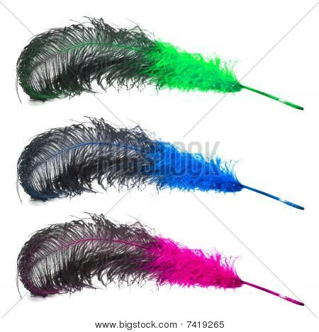 Set Of Bright  Ostrich's Feathers On A White Background