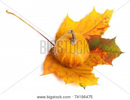 Decorative Pumpkin On Autumn Maple-leaf. Top View.