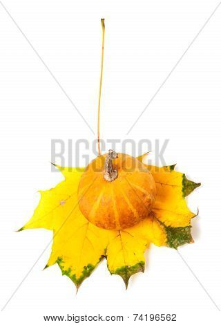 Decorative Pumpkin On Autumn Maple-leaf