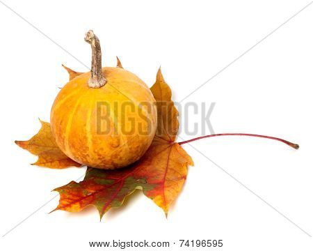 Orange Decorative Pumpkin On Autumn Maple-leaf