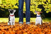 stock photo of dog-walker  - two happy dogs with owner sitting on grass in the park looking up - JPG