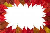 stock photo of creeper  - Autumn leaves frame on white background - JPG