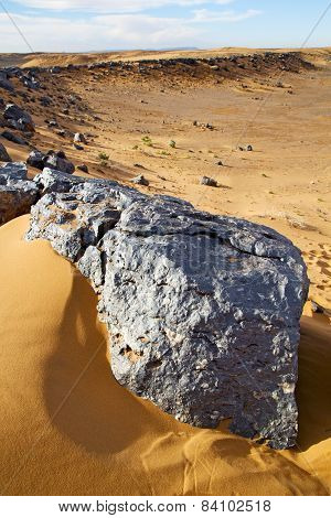 Bush Old  In  The Desert Of Morocco Sahara And Rock  Stone Sky
