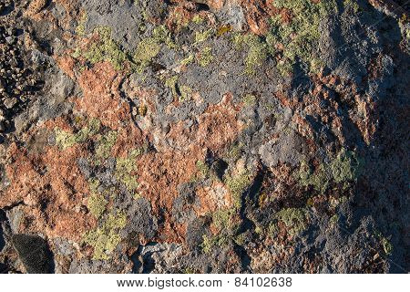 Red Stone, Covered With Lichen