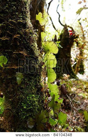 Epiphytes Growing On Tree  In The Rainforest