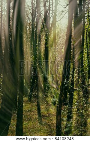 Whirl Of Light And Wind In The Forest