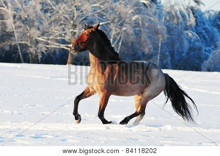 Roan Horse In Winter Field
