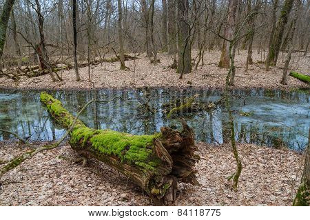 Tree With Moss In The Winter Forest
