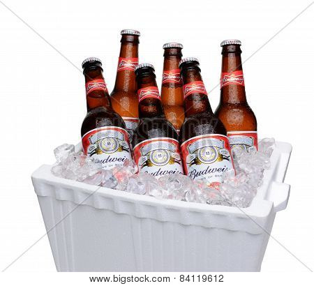 Budweiser In Ice Chest