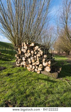 Stacked Wood In A Dutch Nature Area