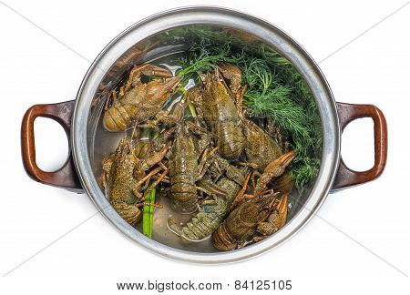 Fresh Crayfish In A Pot