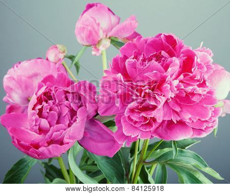 Bouquet of big pink peonies