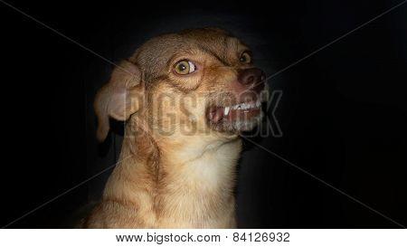 Dog smile in the dark