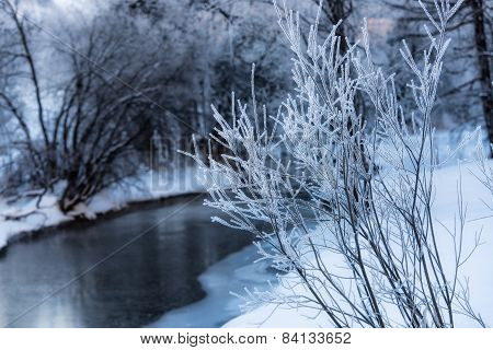 Hoarfrost On Branches Near The River