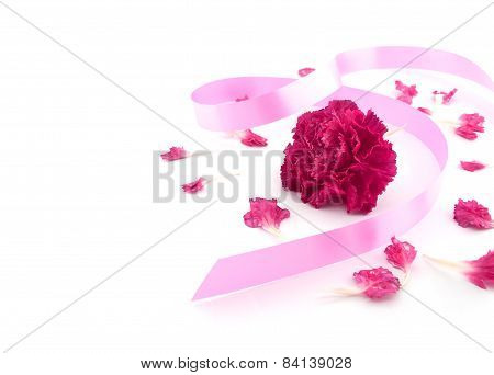 Single Flower, Pink Carnation With Pink Ribbon On White Background.