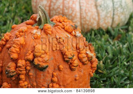 Pair of Pumpkins
