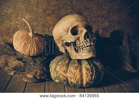 Still Life Skull And Pumpkin On The Timber.