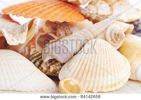 Many Sea Shells