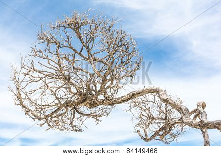 Leafless Tree Of Loneliness