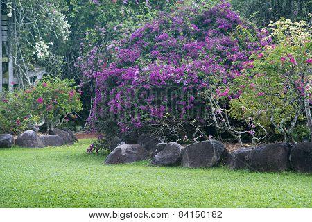 Blossom Plants