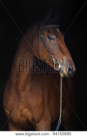 Horse on the black background