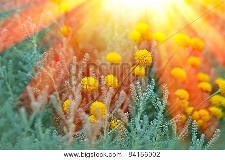 Yellow flowers in flower garden