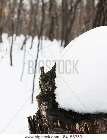 snowdrift on a stump
