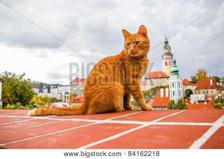 Red Cat On The Roof Of Cesky Krumlov