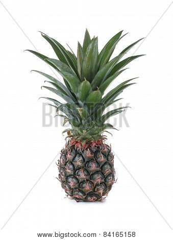 Fresh Pineapple Bulb Isolated On White Background