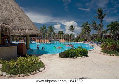 Palmas de piscina de México