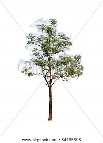 Cork Tree (Die cutting)