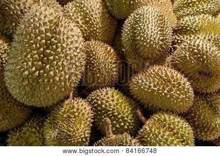 Bunch Of Fresh Raw Durians